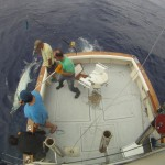 Preparing the Blue Marlin to release