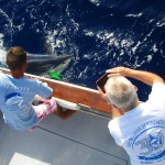 Nice mako shark on the leader