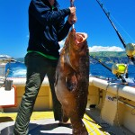 80 pounds Dusky grouper. June