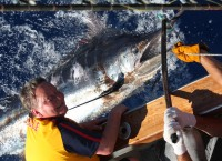 Monster Blue Marlin for Miss Helle