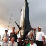 950 lbs Blue Marlin