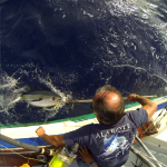 Releasing tunas