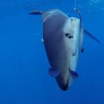 Blue shark selfie