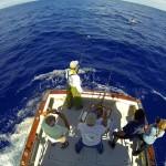 450 pounds blue marlin jumping. September