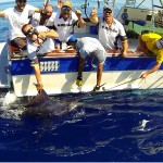 400 pounds blue marlin for the Gibraltar team