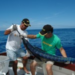 The White Marlin strips